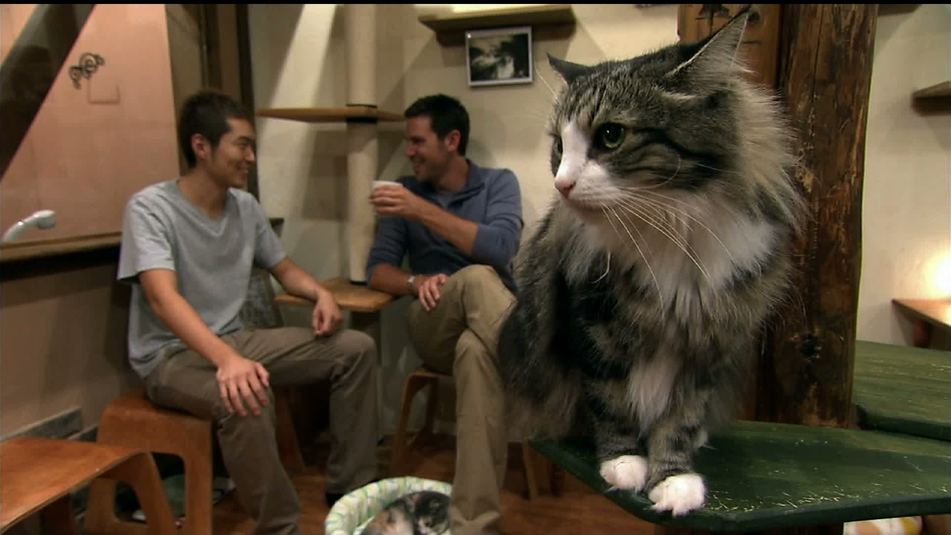 Animal Planet Must Love Cats Cat Crazy In Japan